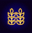 wheat neon sign vector image vector image