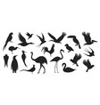wild birds vector image
