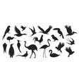 wild birds vector image vector image