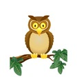 owl cartoon vector image