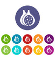 fig fruit icons set flat vector image vector image