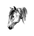ink sketch head horse vector image vector image