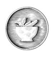mortar and pestle hand drawing in coin vintage vector image vector image