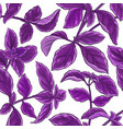 basil plant pattern vector image vector image