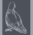 pigeon back view dove bird monochrome sketch vector image vector image