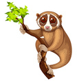 Wild loris on the branch vector image vector image