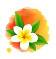 frangipani flower on orange watercolor vector image