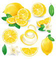 different lemons with leaves and flowers vector image
