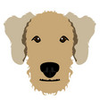 airedale terrier avatar vector image
