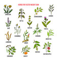 Best herbs for faster weight gain vector image