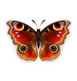 butterfly peacock eye vector image