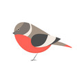 cute little colorful bird isolated on white vector image vector image