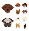design of cute and puppy icon set of cute vector image