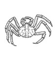 king crab isolated on white background design vector image vector image