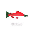 red sockeye salmon fish isolated animal cartoon vector image vector image