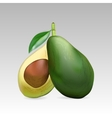 Avocado fruit whole and in section vector image vector image