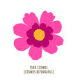 pink cosmos tropical flower vector image vector image