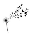 silhouette a dandelion with flying seeds black vector image vector image