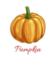 Pumpkin vegetable isolated sketch icon vector image