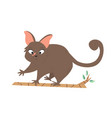 a cute australian possum animal character design vector image vector image