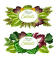 salad leaf vegetables and green plants vector image vector image