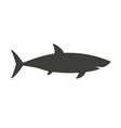 Big Shark Outline Icon vector image