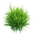 fresh green grass ball vector image
