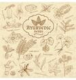 Retro of Ayurvedic herbs Set of web vector image vector image