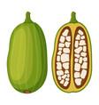 baobab detox fruit cartoon flat style vector image vector image