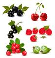 Big group of fresh berries and cherries vector image vector image