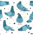 pigeon pattern cartoon seamless texture wild vector image
