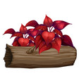 red leaves on white background vector image vector image