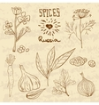 Spices in Russia A collection of distinctive vector image vector image