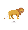 african lion wild animal on isolated background vector image vector image