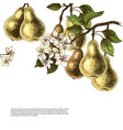 background with hand drawn pear branches vector image vector image