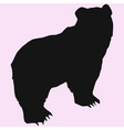 big bear vector image vector image