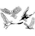 black and white set wild bald eagle