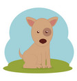 cute dog on grass vector image vector image