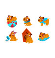 cute little dog cartoon character set funny brown vector image vector image