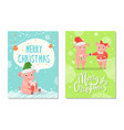 greeting card merry christmas with piggy vector image