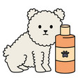 little dog adorable mascot with shampoo bottle vector image