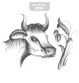 cow hand-drawn vector image vector image