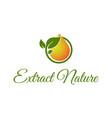 eco water drop leaf logo design template vector image vector image