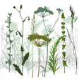 grass and branches vector image vector image