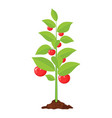 decorative vegetable tree vector image vector image