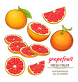grapefruit set vector image vector image