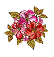 hibiscus floral bouquet vector image vector image