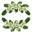 Plumeria tropical bouquet vector image