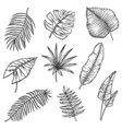 sketch tropical leaves jungle monstera palm leaf vector image