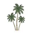 A view of palm tree vector image vector image